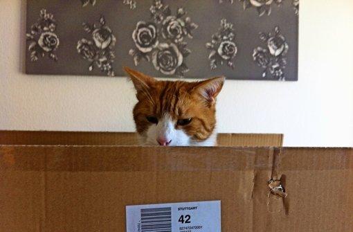 katzenhilfe die katzenhilfe sucht weiterhin ein grundst ck stuttgart s d stuttgarter. Black Bedroom Furniture Sets. Home Design Ideas
