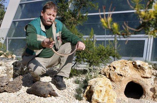 Stellung schildkröten RETTET DIE