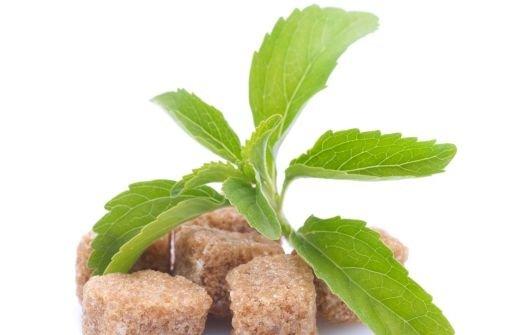 stevia g nstig kaufen rezepte dosierung und tipps wunders e ohne kalorien sicher stevia kaufen. Black Bedroom Furniture Sets. Home Design Ideas
