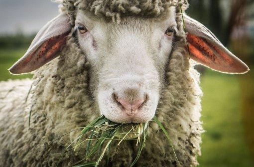Schaf, Esel & Co auf Weihnachtsmärkten