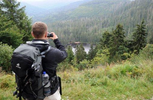 Fraktionschef  Hauk verlangt Alternativen zum  Nationalpark Nordschwarzwald und     schlägt Bürgerbefragungen vor. Foto: dpa