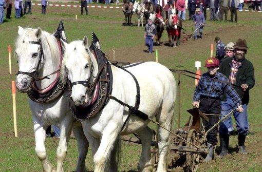 Pferd und Mensch Foto: dpa