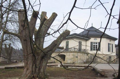 """Bürger ärgert sich über """"amputierte"""" Bäume"""
