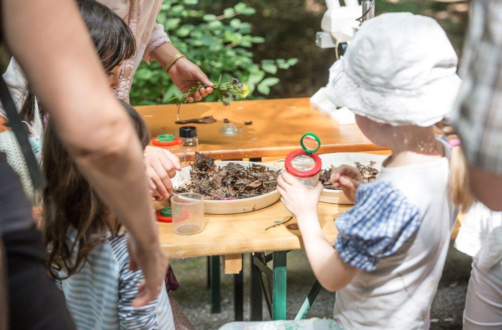 Sommerfest am haus des waldes: kleine forscher entdecken kleine