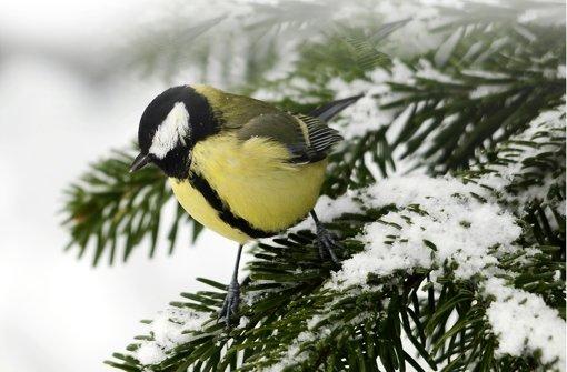naturnaher garten v gel sind nicht nur im winter da web wissen stuttgarter nachrichten. Black Bedroom Furniture Sets. Home Design Ideas
