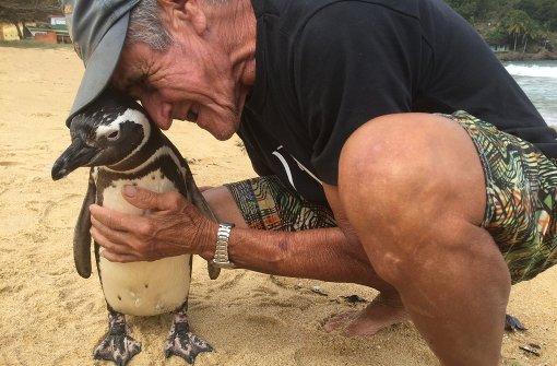 Die Geschichte vom treuesten Pinguin der Welt