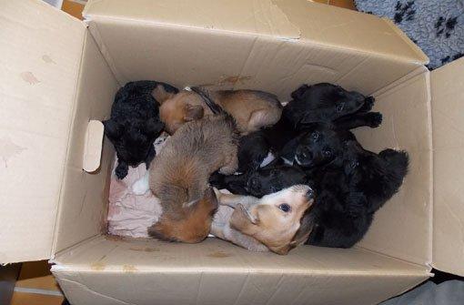 In diesem Karton wurden die Welpen am Silvestertag gefunden. Foto: Tierschutzverein Stuttgart u. Umgebung e.V.