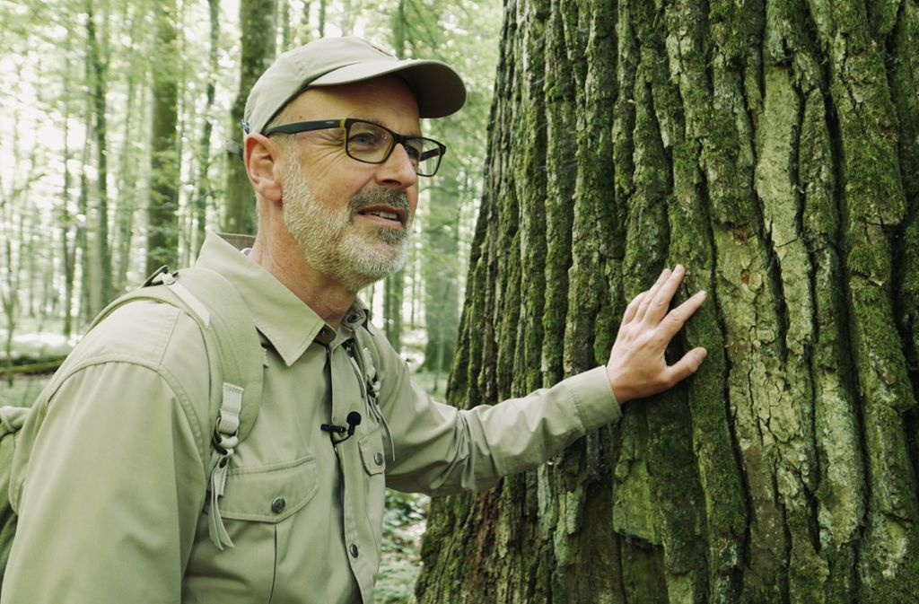 Kinokritik Das Geheime Leben Der Baume Peter Wohlleben Erklart Den Wald Kultur Stuttgarter Nachrichten