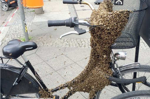 Hunderte Bienen bedecken Fahrrad