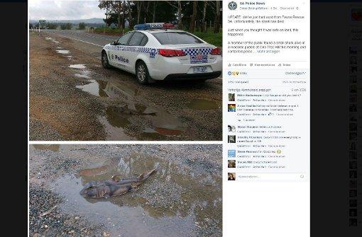 Australische Polizei findet Hai in Pfütze