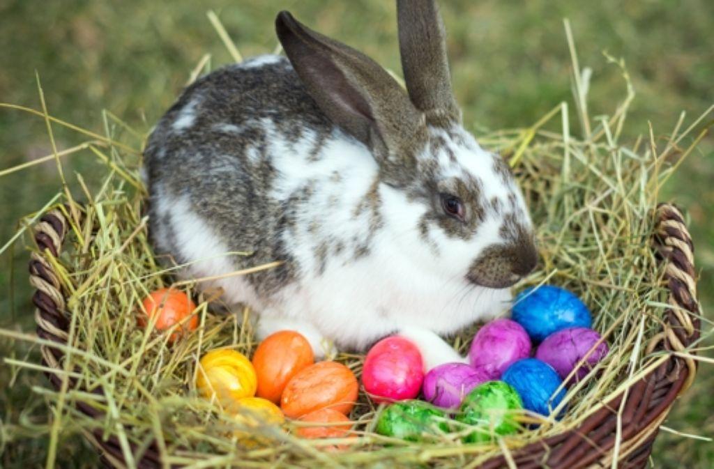 hase eier und co  osterwissen von a bis z  stuttgart