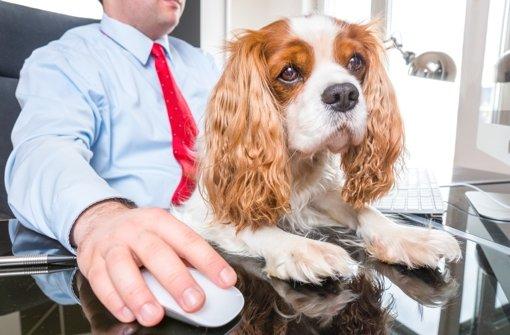 Mensch und Hund – ein mitunter  seltsames Gespann.pure-life-pictures/Fotolia Foto: