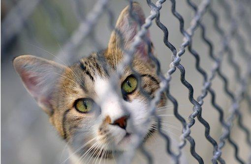 Katze auf Spielplatz gequält