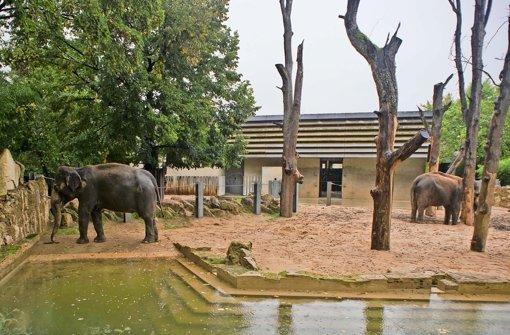 wilhelma zoo chef plant mit nachdruck neues elefantenhaus stuttgart stuttgarter nachrichten. Black Bedroom Furniture Sets. Home Design Ideas