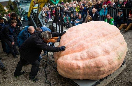 Weltrekord-Kürbis bekommt Gesicht zu Halloween