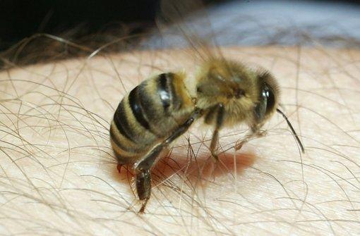 bienen wespen und hornissen wie gef hrlich sind insektenstiche web wissen stuttgarter. Black Bedroom Furniture Sets. Home Design Ideas