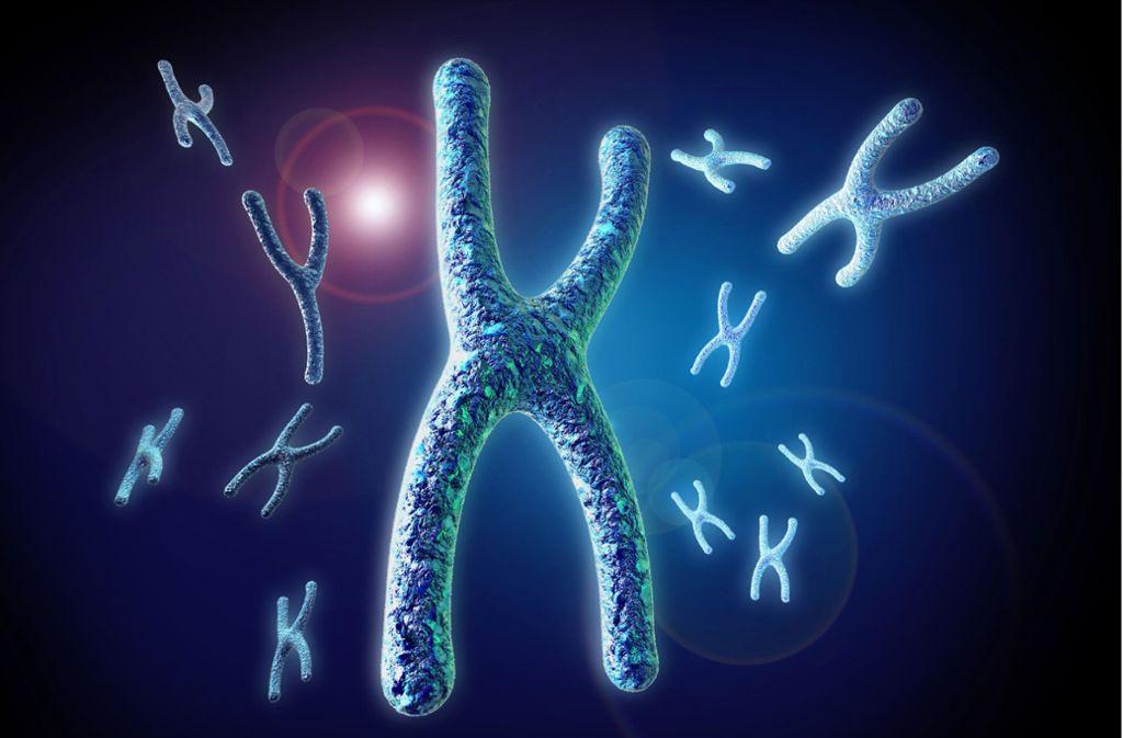 männer chromosom