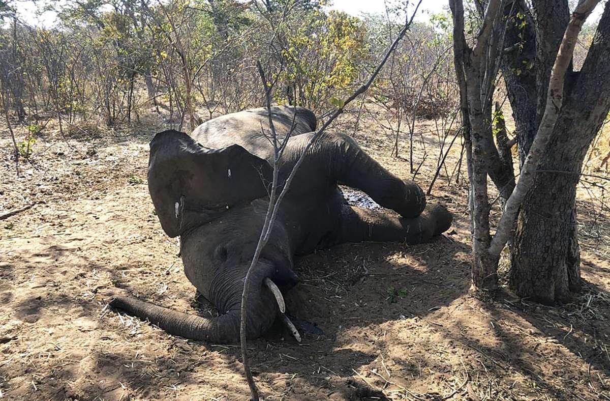 Elefanten Sterben Corona