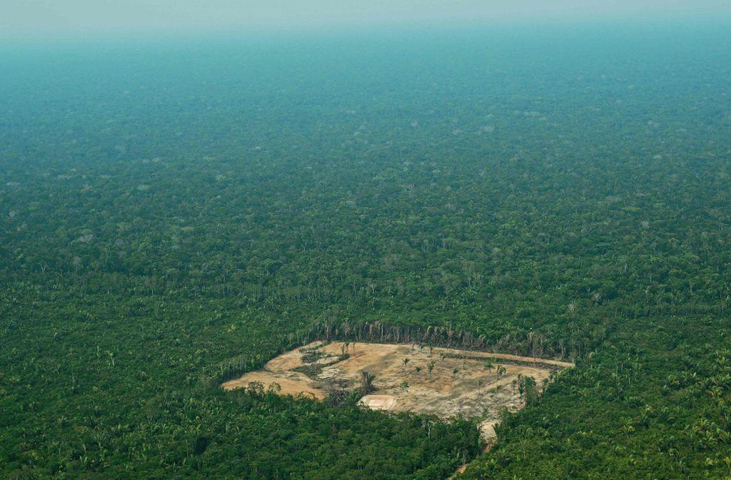 Amazonas In Brasilien Die Lunge Der Welt Ist Durch Die Wahlen In