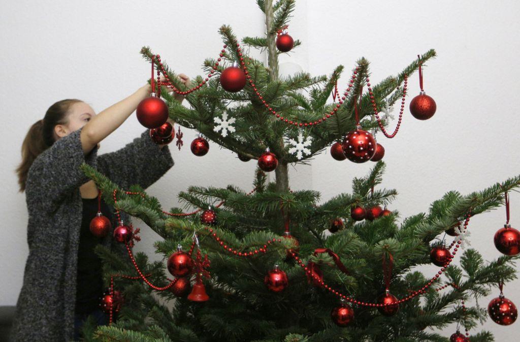 Wieso Tannenbaum Weihnachten.Insekten Invasion Zu Weihnachten Das Große Krabbeln Auf Dem