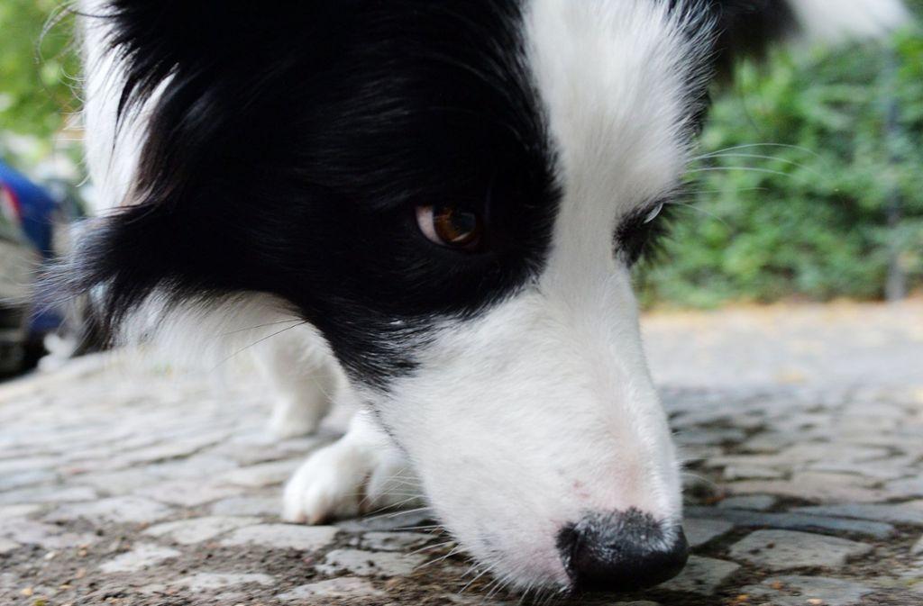 Kempten Hund Angezündet
