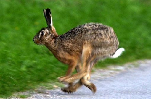 Ein Virus verbreitet sich schneller als die Hasen