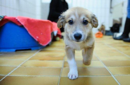 Mischlingshunde Gerettet Ausgesetzte Welpen Suchen Ein Zuhause Stuttgart Stuttgarter
