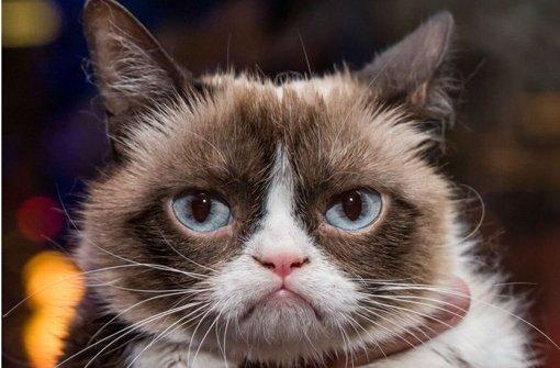 Grumpy-Cat-Superstar: Die bekannteste Katze der Web-Community. Foto: Mauritius