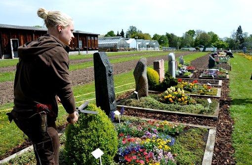Vanilleblumen und Salbei auf dem Grab