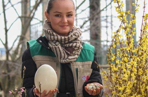 Eier in allen Größen – zu besichtigen im Wunderland Wilhelma. Foto: Wilhelma