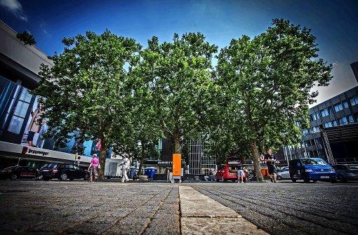 25 neue Bäume für Innenstadt