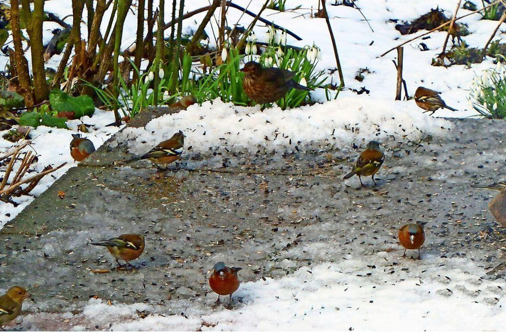 Futterungstipps Vom Nabu Filder Die Zahl Der Vogel Hat Rapide