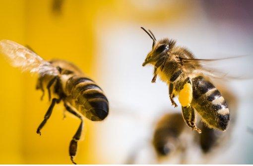 Hoffnung auf volle Honigtöpfe