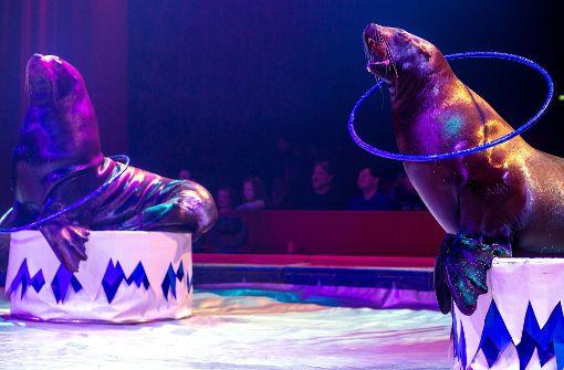 Proteste gegen Seelöwen im Zirkuszelt