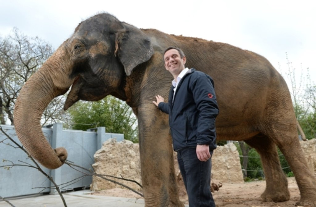 das erste gro e projekt des neuen wilhelma chefs thomas k lpin ist das elefanten gehege. Black Bedroom Furniture Sets. Home Design Ideas
