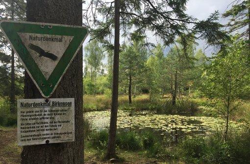 Ein verborgenes Naturdenkmal