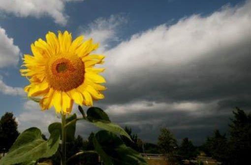 Sonne und Wolken wechseln sich ab