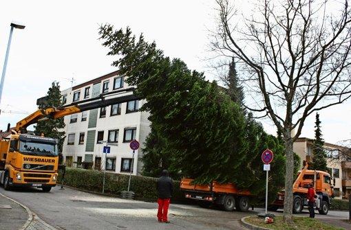 leinfelden echterdingen ein weihnachtsbaum auf r dern. Black Bedroom Furniture Sets. Home Design Ideas