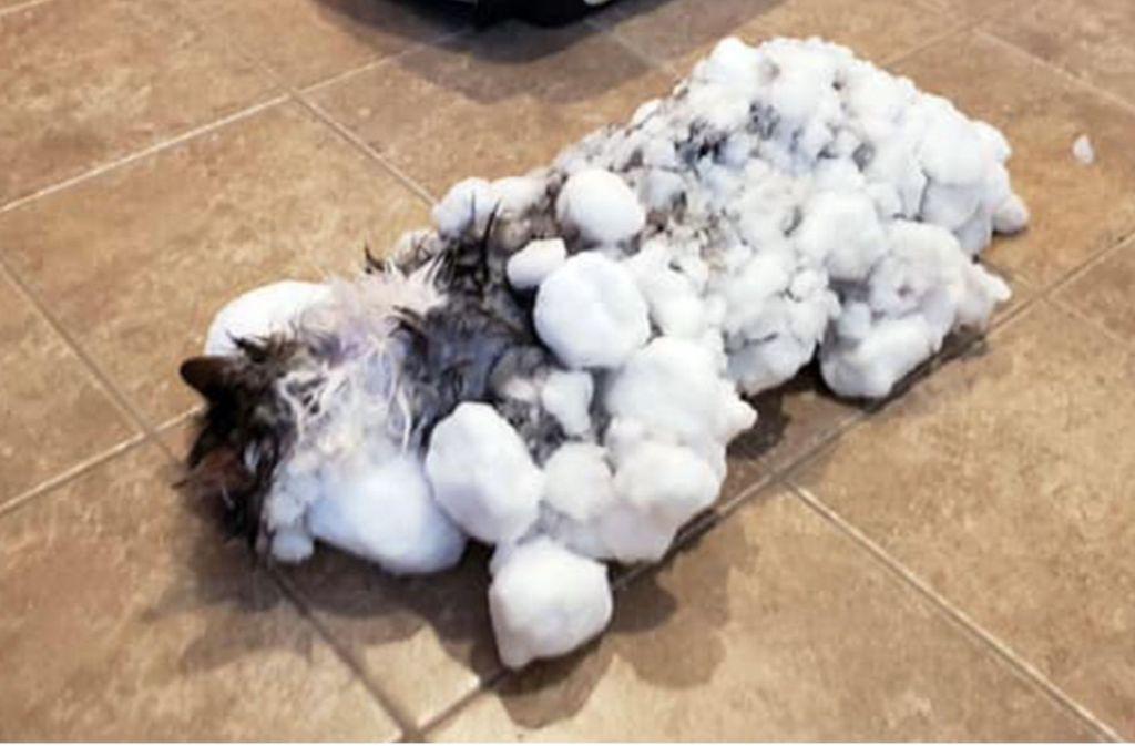 Katze Eingefroren