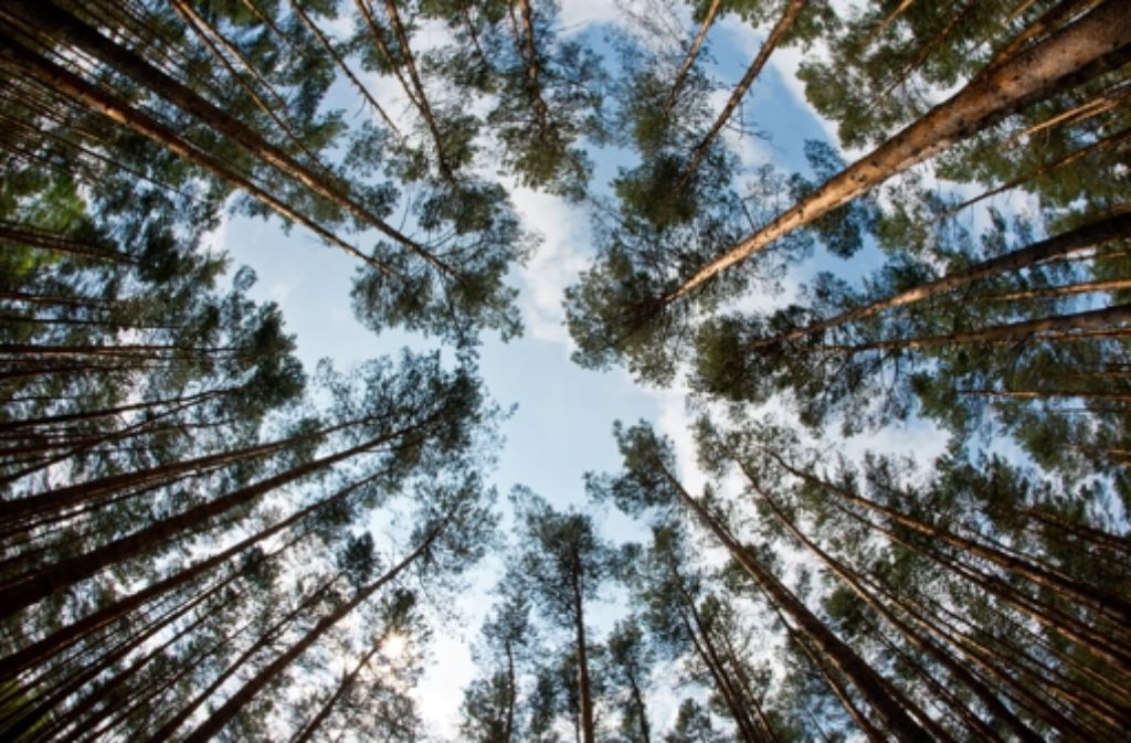 Munitionsdepot im Tiefenbachtal: Bunker sollen unter Wald