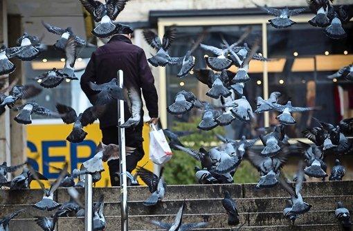 Tierschützer sorgen sich um Tauben