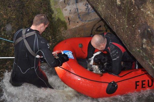 Junger Hund von Hochwasser mitgerissen