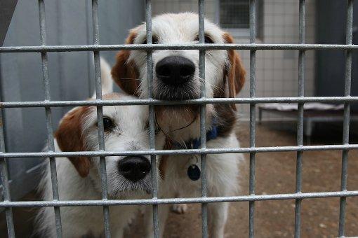 Tierheimleiterin Marion Wünn schlägt Alarm: Noch etwa drei Monate, dann seien die Geldreserven des Tierheims Botnang aufgebraucht. Was dann mit den insgesamt rund 1000 herrenlosen Hunden, Katzen und Kleinsäugern geschieht, steht in den Sternen. Foto: Fotoagentur Beytekin/Weiberg