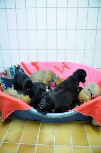 Fotostrecke Mischlingshunde Gerettet Ausgesetzte Welpen Suchen Ein Zuhause Bild 8 Von 8