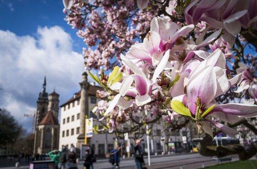 Nach Wintereinbruch kommt der Frühling zurück