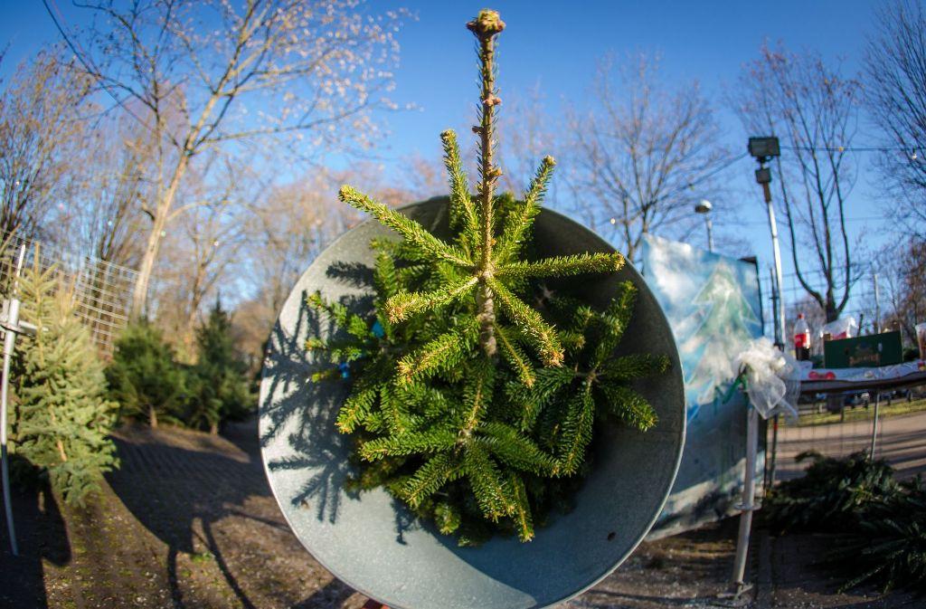 Weihnachtsbaum Kaufen Karlsruhe.Baden Württemberg So Viel Kosten Die Weihnachtsbäume In Diesem Jahr