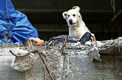 Rettungshunde üben den Ernstfall