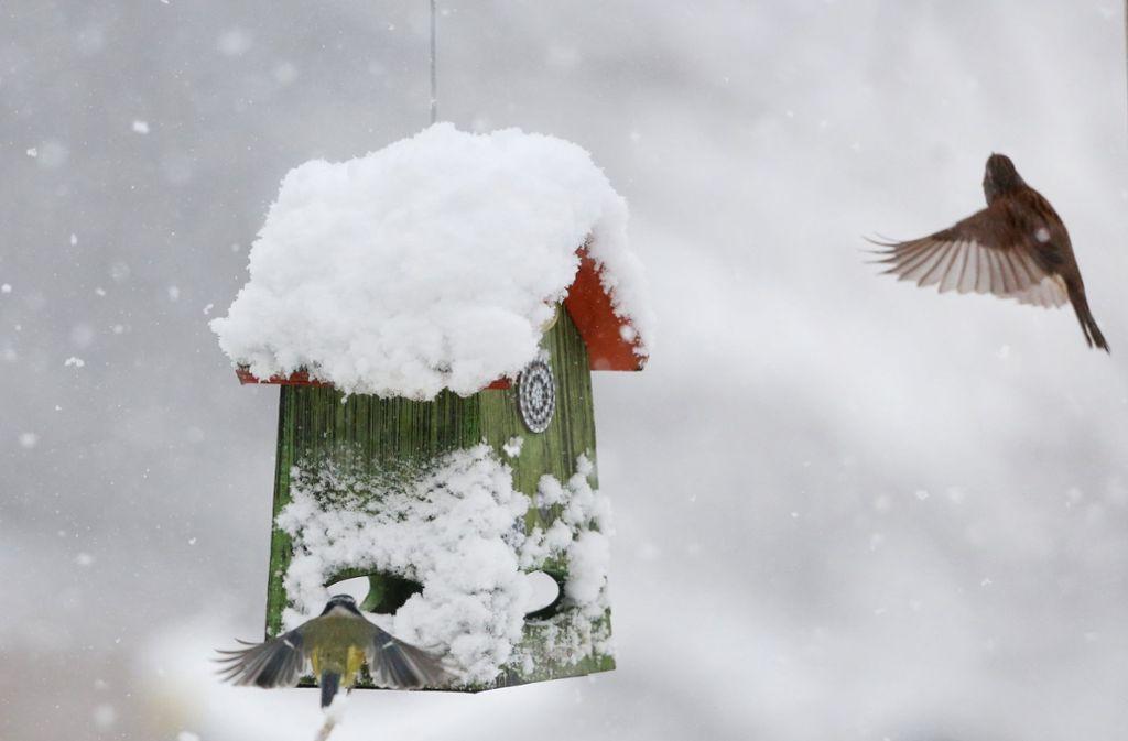 Winter Drei Tipps Zum Vogel Futtern Panorama Stuttgarter