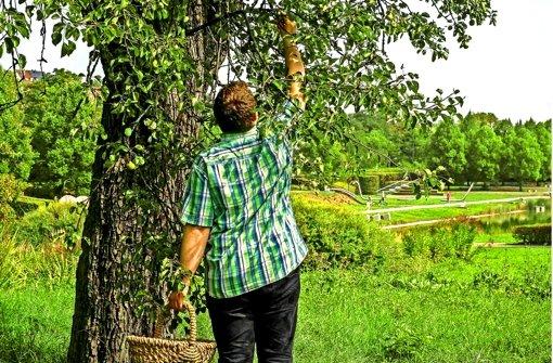 Einkaufen im Supermarkt geht leichter, dafür liegt der Birnbaum im Park der Villa Berg schöner. Gehen Sie mit unserem Autor auf Mundraub-Tour. Klicken Sie sich durch die Bildergalerie. Foto: Lichtgut/Max Kovalenko