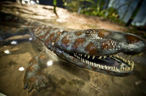 Ichtyostega lebte im Devon (vor 419 bis 359 Millionen Jahren) und war eines der ersten vierfüßigen Wirbeltiere, das zeitweilig auf dem Land lebte. Foto: Max Kovalenko